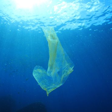Underwater-plastic-bag-pollution-369x369